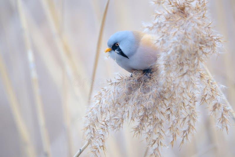 Uccello sulla nappa a lamella fotografia stock libera da diritti