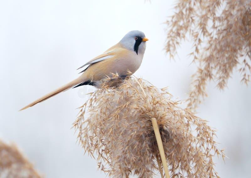 Uccello sulla nappa a lamella immagine stock