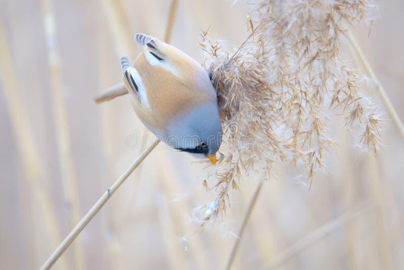 Uccello sulla nappa a lamella fotografia stock