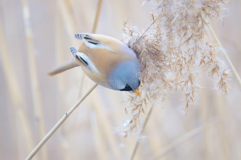 Uccello sulla nappa a lamella fotografie stock