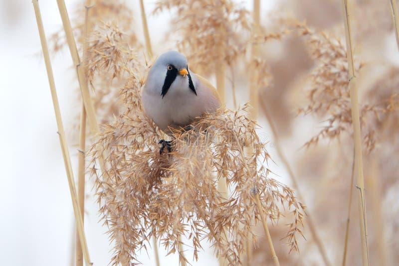 Uccello sulla nappa a lamella immagini stock