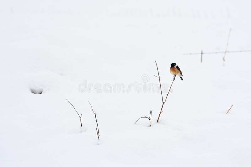Uccello sulla pianta nella neve di inverno fotografie stock