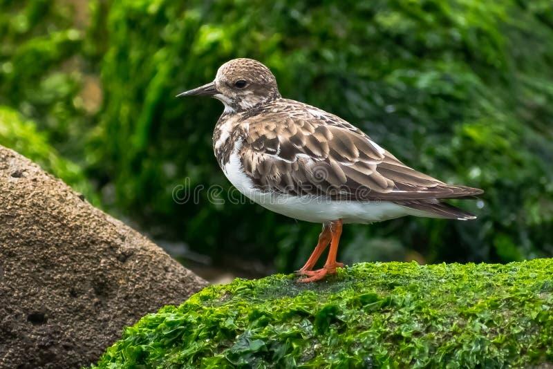 Uccello sulla roccia fotografie stock