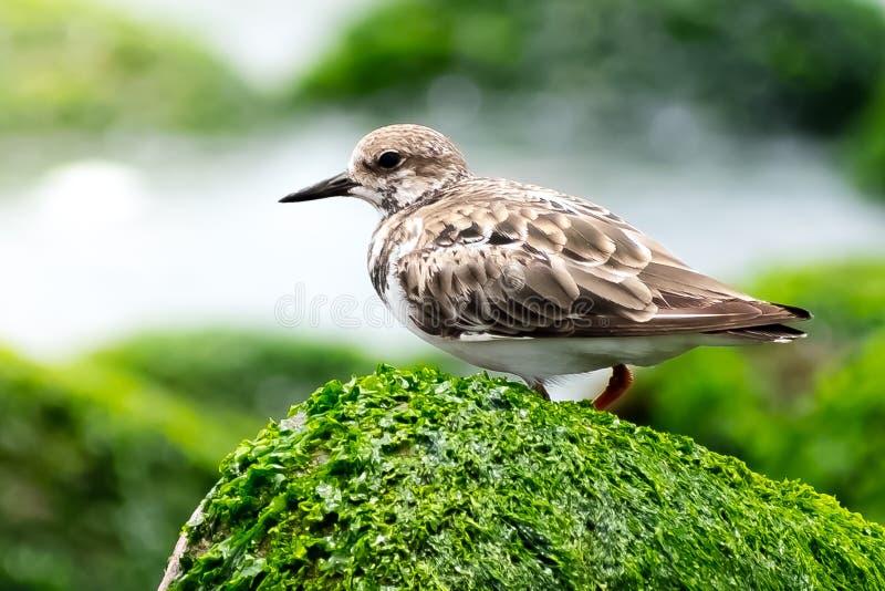 Uccello sulla roccia immagine stock