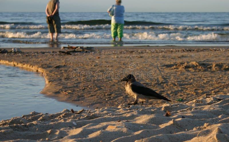 Uccello sulla spiaggia fotografia stock libera da diritti