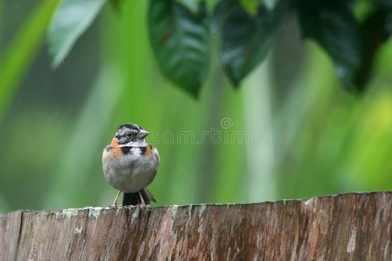 Uccello tropicale fotografia stock