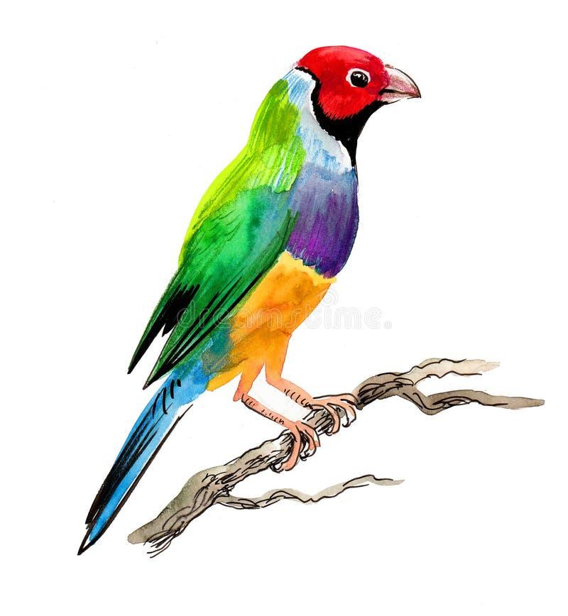 Uccello variopinto del fringillide royalty illustrazione gratis