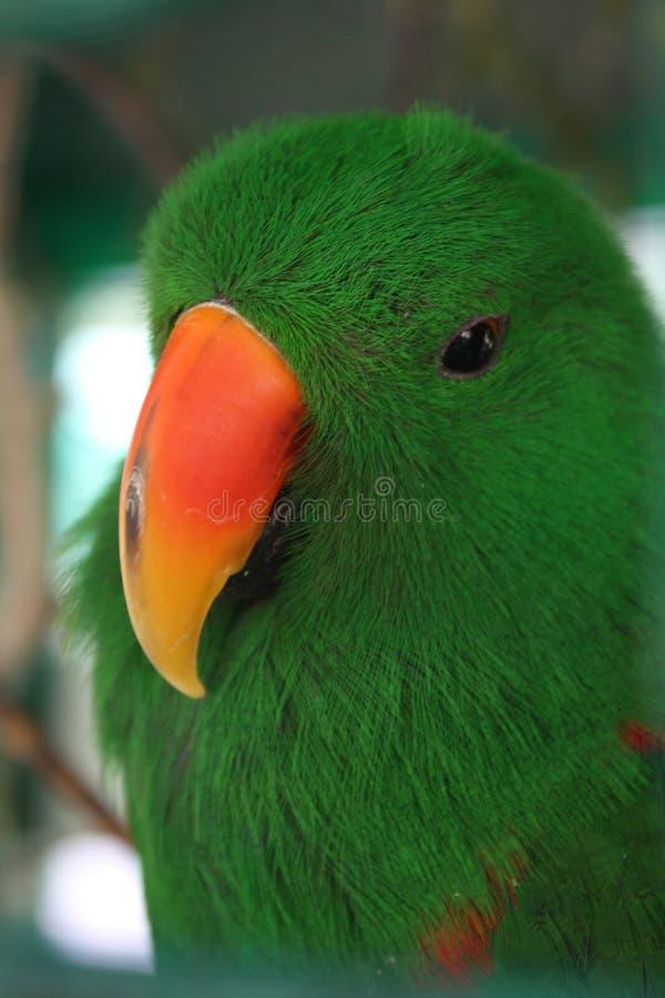 Uccello verde fotografie stock libere da diritti