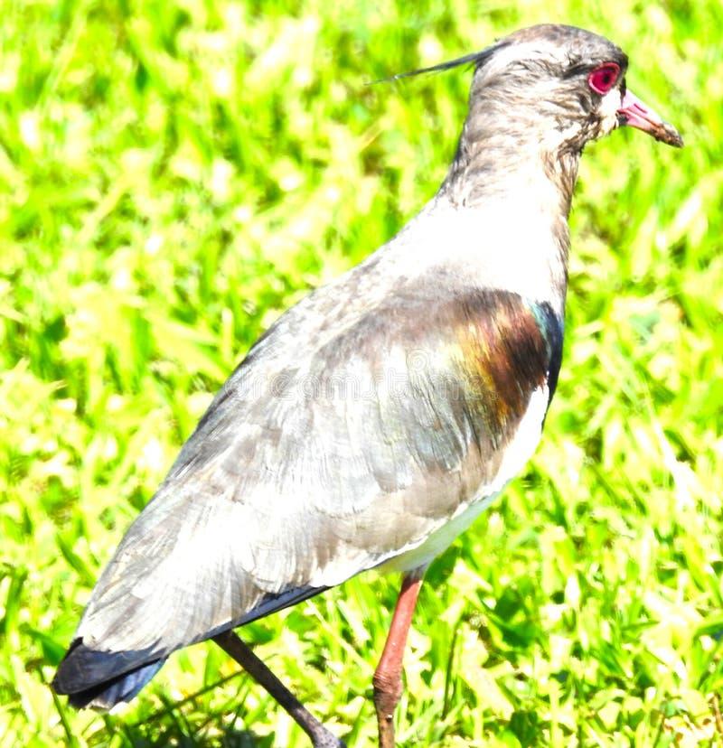 Uccello zero dell'esposizione fotografie stock