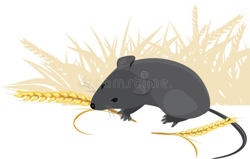 ucho śródpolnej myszy banatka royalty ilustracja