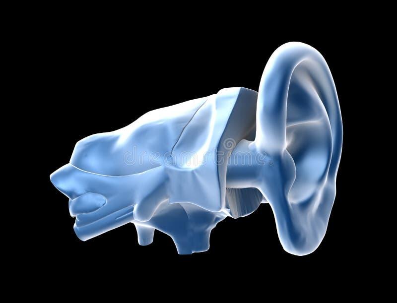 ucho ludzcy ilustracji