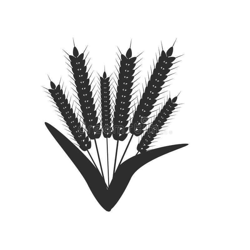 Ucho pszeniczny ikona wektoru znak i symbol odizolowywający na białym tle, ucho pszeniczny logo pojęcie ilustracji