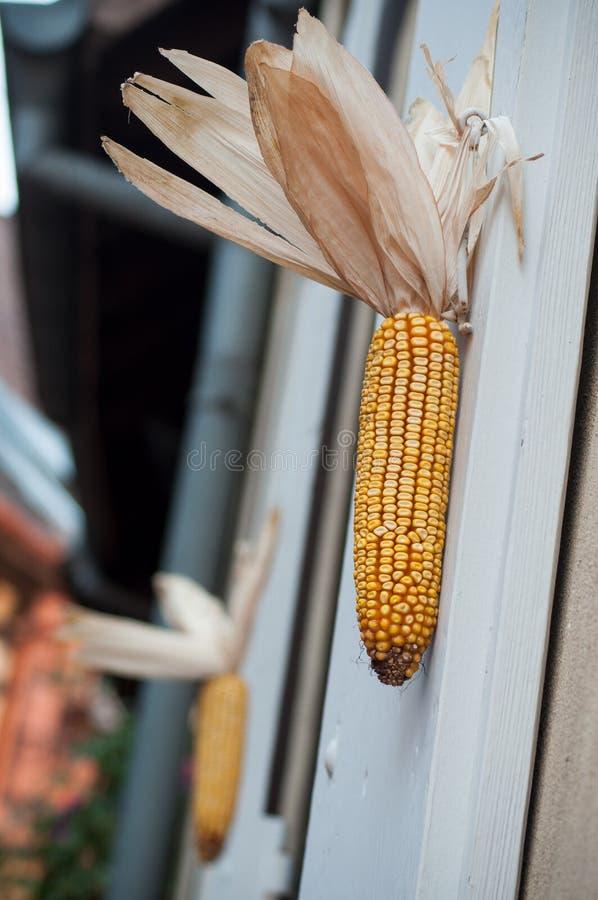 Ucho zawieszający na alsatian domu fasadzie kukurudza obrazy stock