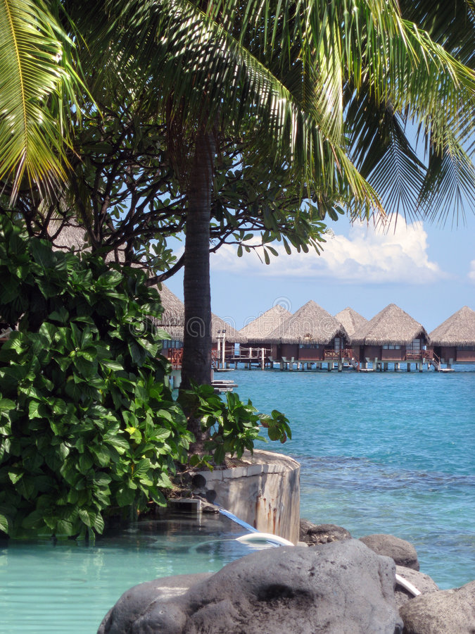 ucieka się tropikalnego zdjęcia royalty free