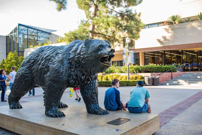 UCLA niedźwiadka niedźwiedź obrazy royalty free
