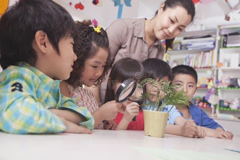 Ucznie Patrzeje rośliny z Powiększać - szkło obraz royalty free