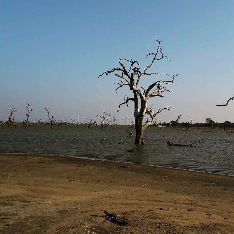 Udawalawa nationalpark royaltyfri fotografi