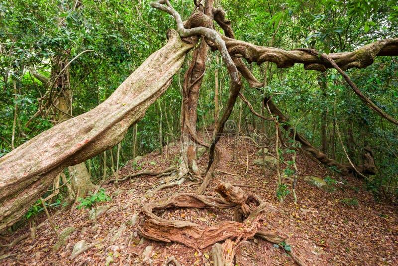 Udawattakele皇家森林公园 库存图片