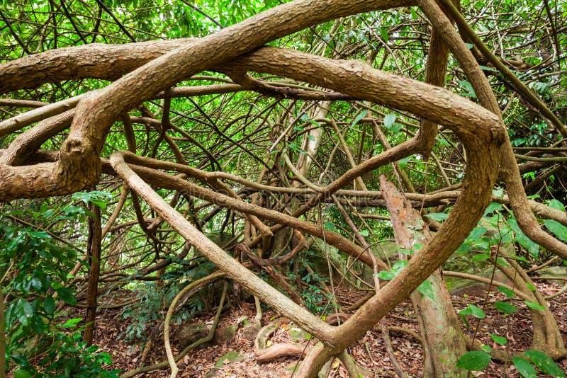 Udawattakele皇家森林公园 图库摄影