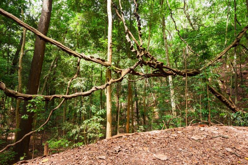 Udawattakele皇家森林公园 免版税库存照片