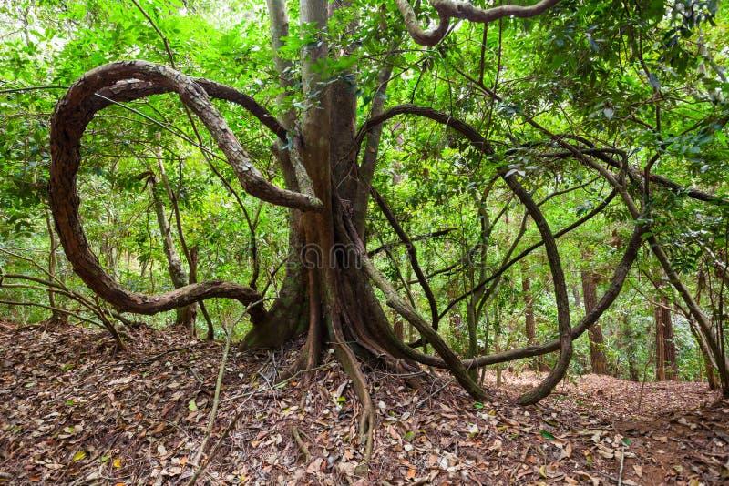 Udawattakele皇家森林公园 免版税库存图片