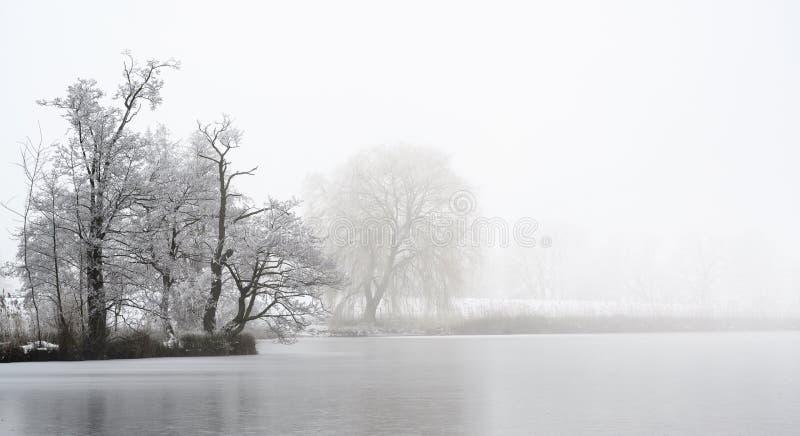 Udde med kala träd som täckas av hoarfrost på en djupfryst sjö på en kall dimmig vinterdag, grått landskap med kopieringsutrymme arkivbild