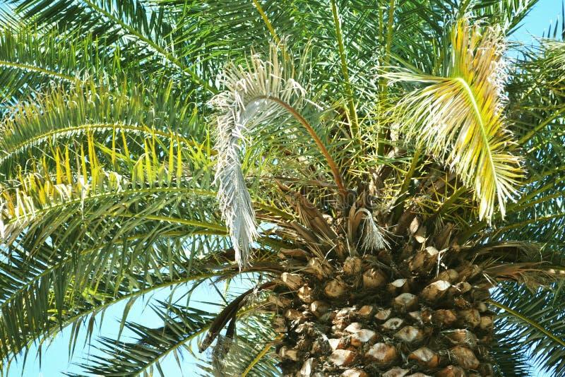 从uderneath的棕榈 免版税库存图片