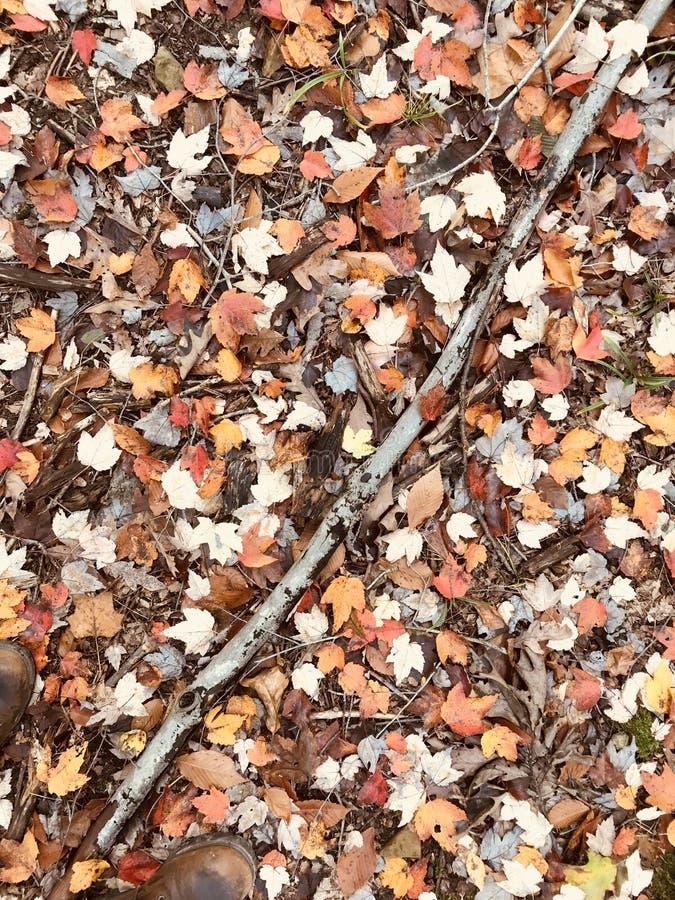Uderzający wzór brązu i pomarańcze jesieni liście z kijem zdjęcie stock