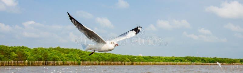 Uderzenie Poo, Tajlandia: Seagull latanie. zdjęcie stock