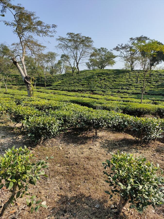 Udhabond Tea Estate Assam India. Udhabond Tea  Estate  is looking very nice location in Cachar Assam India  product of Tea are good quality royalty free stock photography