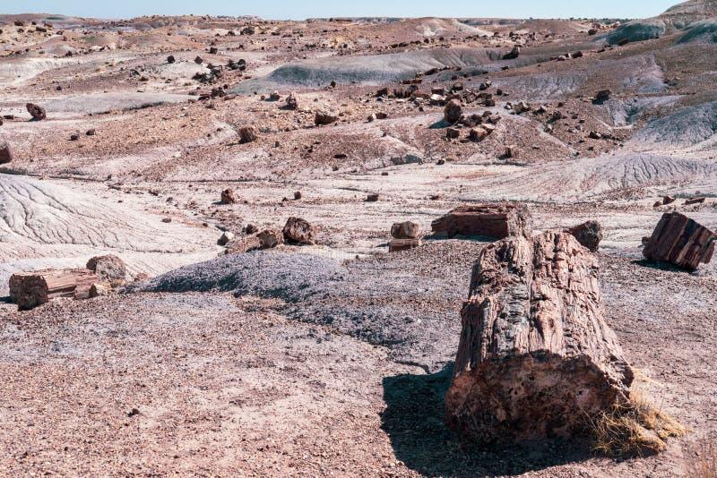Udziały osłupiały drewno logują się światło słoneczne Osłupiały Lasowy park narodowy w Arizona zdjęcie stock