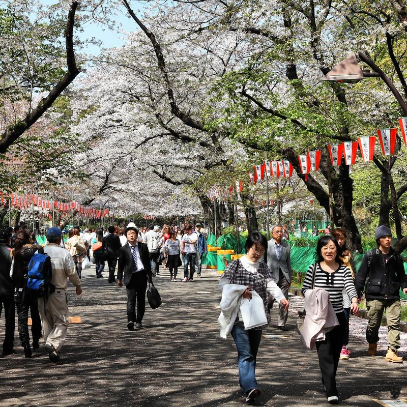 Ueno Park Cherry Blossom stock image