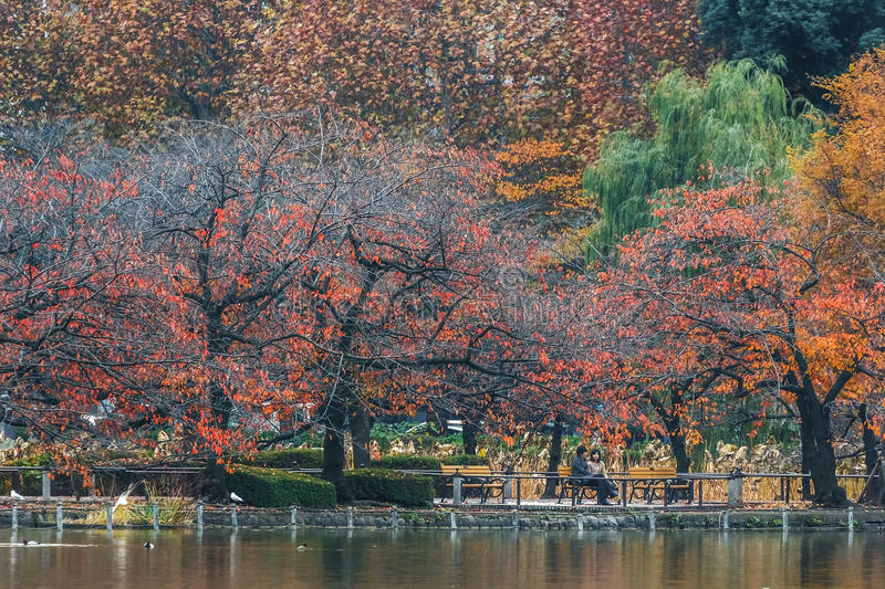 Ueno Park in Tokyo royalty free stock photography