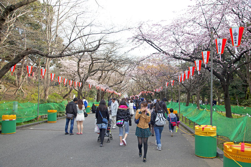 Ueno Park in Tokyo with Sakrua Cherry Blossum stock photography