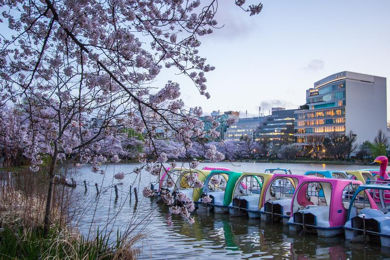 Ueno Sakura Matsuri Cherry Blossom Festival at Ueno ParkUeno Koen,Taito,Tokyo,Japan on April 7,2017:Water bikes and cherry tre stock image
