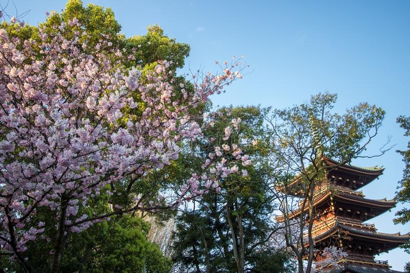 Ueno Sakura Matsuri Cherry Blossom Festival at Ueno ParkUeno Koen,Taito,Tokyo,Japan on April 7,2017:Five-story pagoda of forme royalty free stock photos