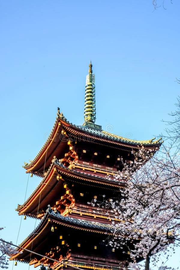 Ueno Sakura Matsuri Cherry Blossom Festival at Ueno ParkUeno Koen,Taito,Tokyo,Japan on April 7,2017:Five-story pagoda of forme royalty free stock photography