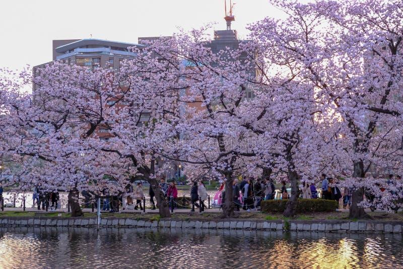 Ueno Sakura Matsuri Cherry Blossom Festival at Ueno ParkUeno Koen,Taito,Tokyo,Japan on April 7,2017:Cherry trees along Shinoba stock image