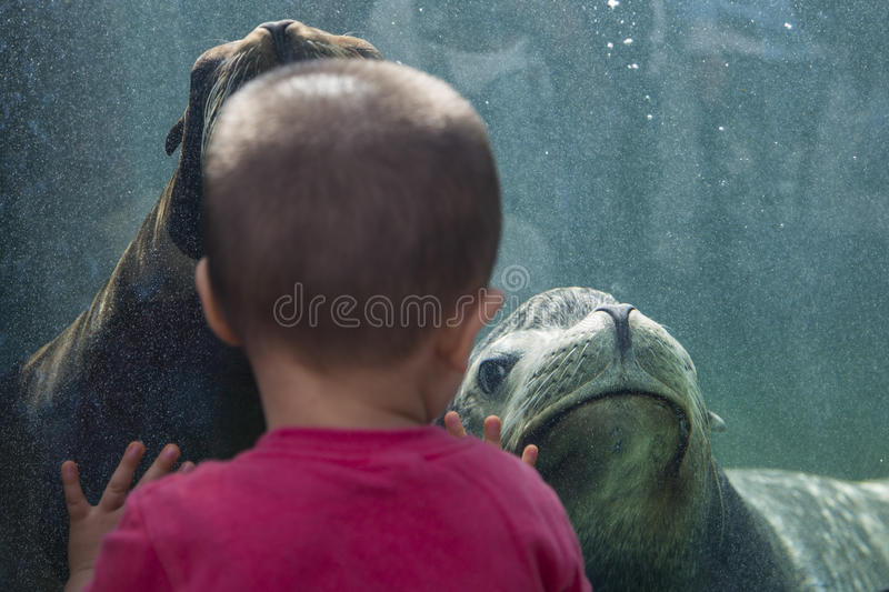 Ueno zoo in Tokyo, Japan. Unidentified children with sea lion at Ueno zoo in Tokyo, Japan. It is Japan oldest zoo, opened on March 20, 1882 royalty free stock photo