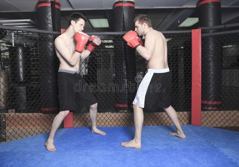 UFC Fighter. Two Athletes practice technique of fight fo a futur event stock photo