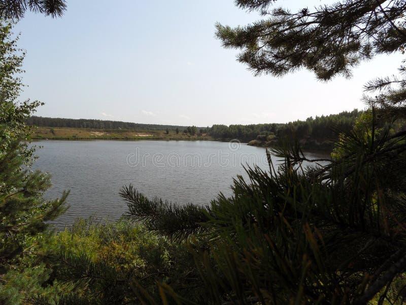 Ufer der Bucht im Wald am sonnigen Tag Ansicht hinter die Bäume lizenzfreie stockfotos