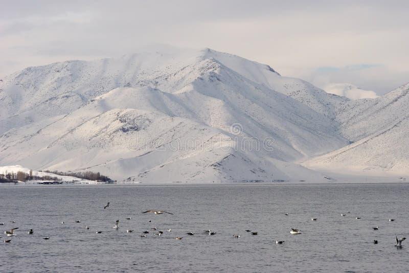 Ufer von Van Lake, die Osttürkei lizenzfreie stockbilder