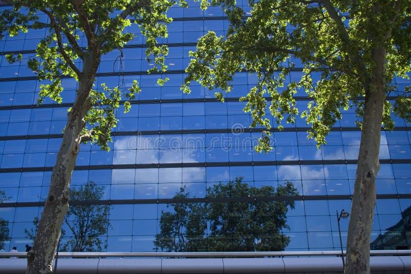 Ufficio fra gli alberi fotografie stock libere da diritti