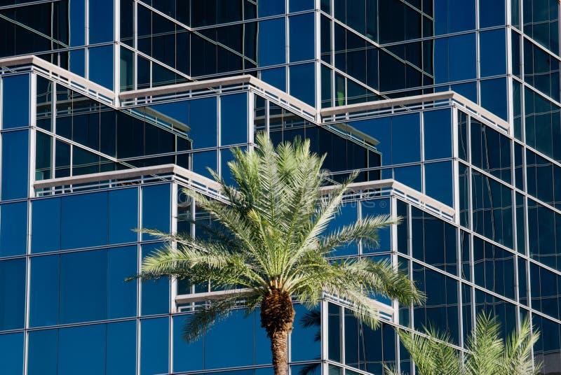 Ufficio moderno con le palme fotografia stock libera da diritti