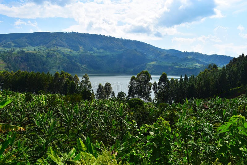 uganda royaltyfri foto