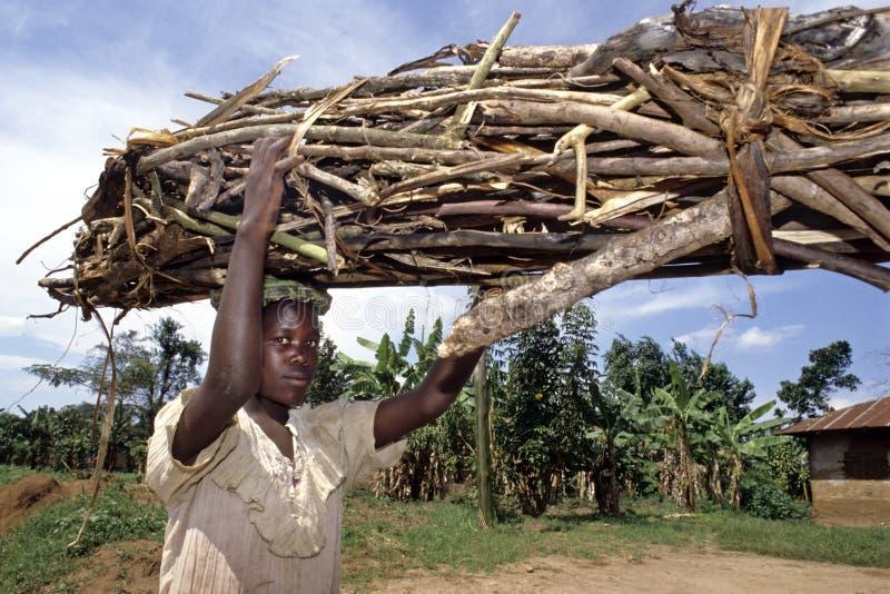 Ugandanmädchen trägt Brennholz auf ihrem Kopf lizenzfreies stockfoto