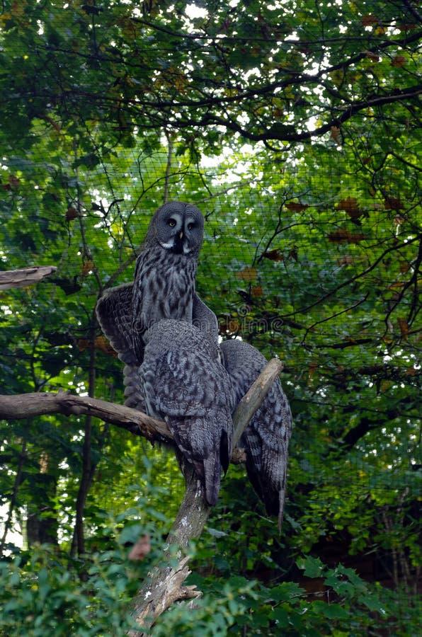 Uggla vänliga djur på den Prague zoo arkivfoton