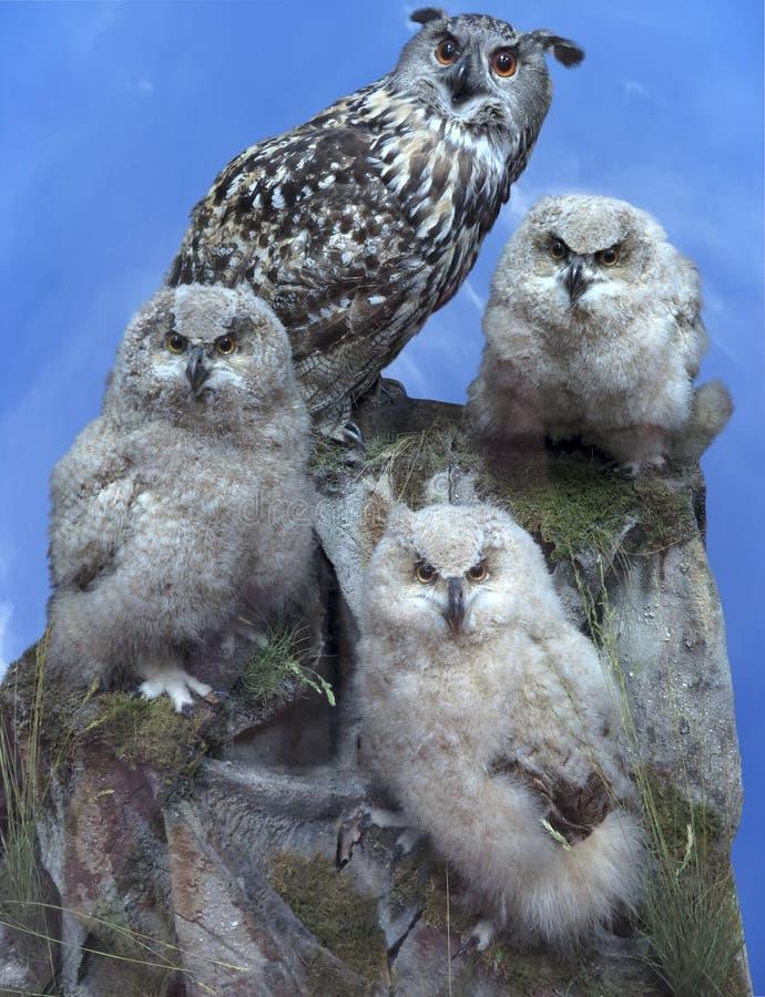 Ugglafamiljen - uppfostra och fågelunge tre över blå himmel royaltyfri bild
