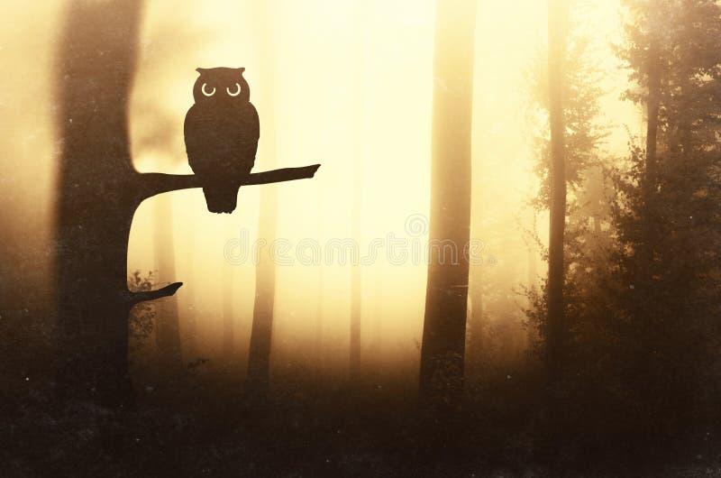 Ugglakontur på trädfilial i mystisk skog fotografering för bildbyråer
