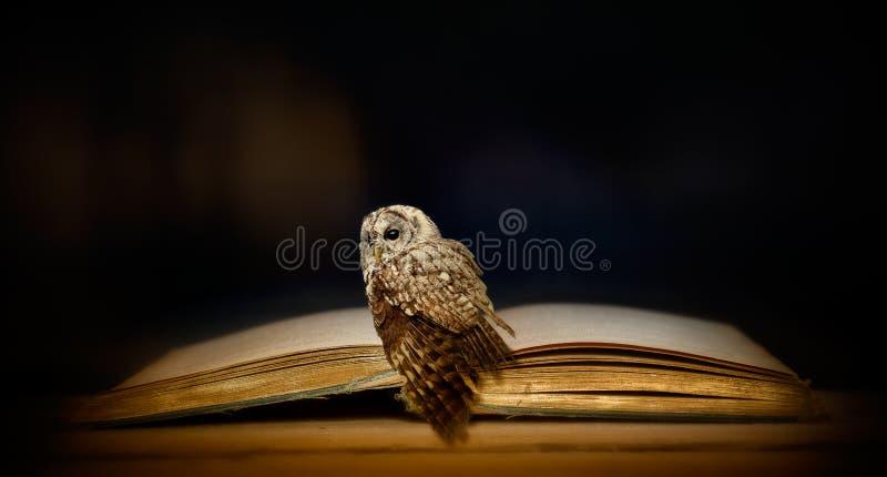 Ugglan och den gamla boken arkivfoto